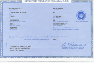Cisco Orthopedics Certificate